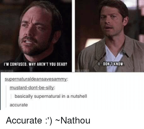 being silly: I'M CONFUSED WHY ARENTYOU DEAD?  supernaturaldeansavesammy:  mustard-dont-be-silly:  basically supernatural in a nutshell  accurate  DONT KNOW Accurate :') ~Nathouツ