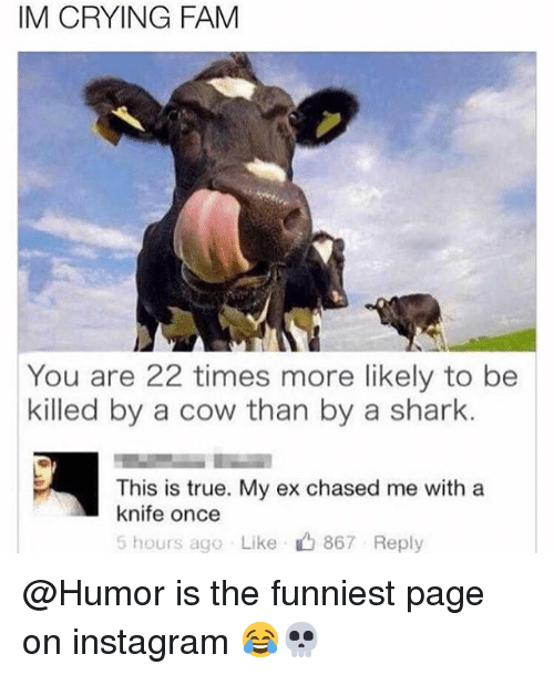 Crying, Fam, and Funny: IM CRYING FAM  You are 22 times more likely to be  killed by a cow than by a shark.  This is true. My ex chased me with a  knife once  5 hours ago Like, 867 Reply @Humor is the funniest page on instagram 😂💀