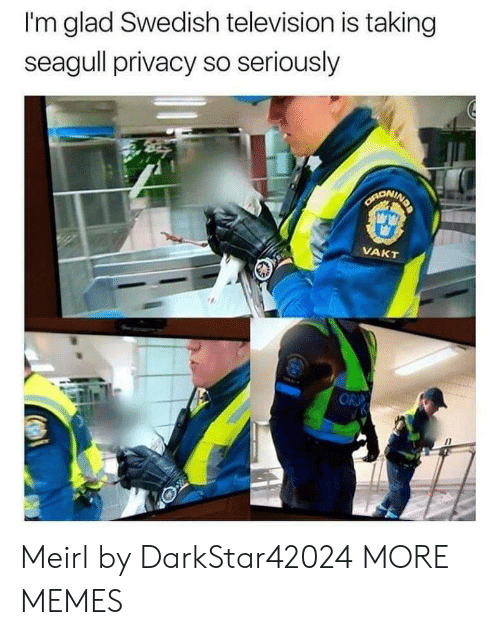 Privacy: I'm glad Swedish television is taking  seagull privacy so seriously  SARONING  VAKT  OR Meirl by DarkStar42024 MORE MEMES