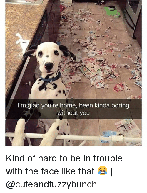 Memes, Home, and Been: I'm glad you're home, been kinda boring  without you Kind of hard to be in trouble with the face like that 😂 | @cuteandfuzzybunch