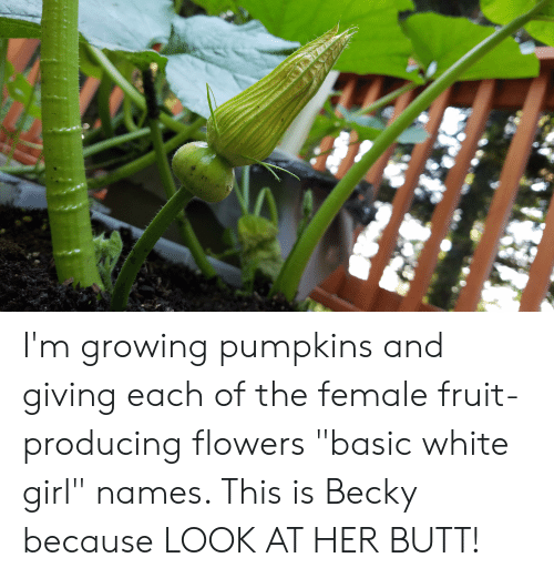 """Butt, White Girl, and Flowers: I'm growing pumpkins and giving each of the female fruit-producing flowers """"basic white girl"""" names. This is Becky because LOOK AT HER BUTT!"""