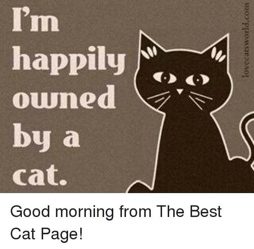 Memes, Best Cat, and 🤖: I'm  happily  owned  by a  Cat. Good morning from The Best Cat Page!