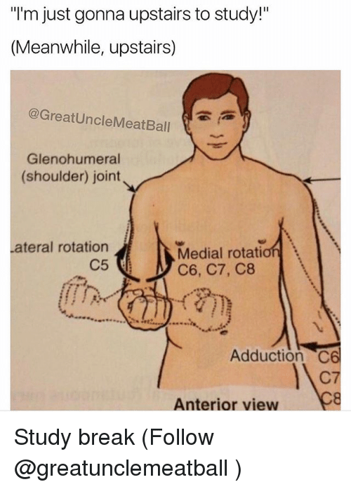 """anterior: """"I'm just gonna upstairs to study!""""  (Meanwhile, upstairs)  @GreatUncleMeatBall  Glenohumeral  (shoulder) joint  ateral rotation  C5  Medial rotation  C6, C7, C8  Adduction C6  C7  Anterior view Study break (Follow @greatunclemeatball )"""