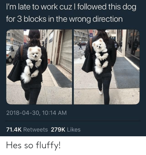 Work, Dog, and Fluffy: I'm late to work cuz I followed this dog  for 3 blocks in the wrong direction  2018-04-30, 10:14 AM  71.4K Retweets 279K Likes Hes so fluffy!