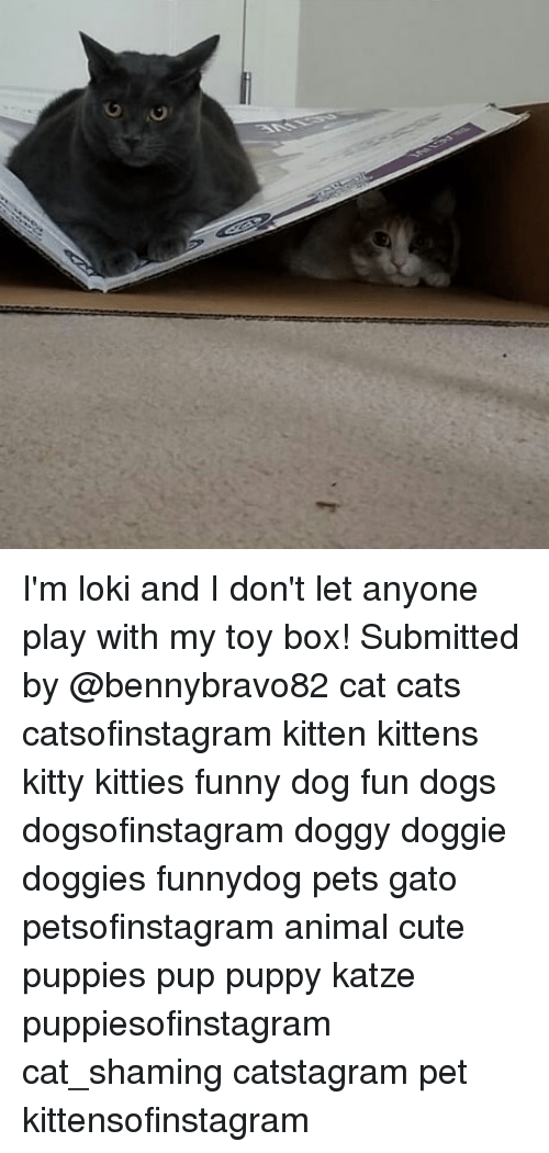 Katze: I'm loki and I don't let anyone play with my toy box! Submitted by @bennybravo82 cat cats catsofinstagram kitten kittens kitty kitties funny dog fun dogs dogsofinstagram doggy doggie doggies funnydog pets gato petsofinstagram animal cute puppies pup puppy katze puppiesofinstagram cat_shaming catstagram pet kittensofinstagram