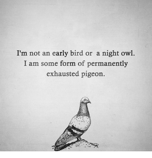 Exhausted Pigeon: I'm not an early bird or a night owl.  I am some form of permanently  exhausted pigeon.