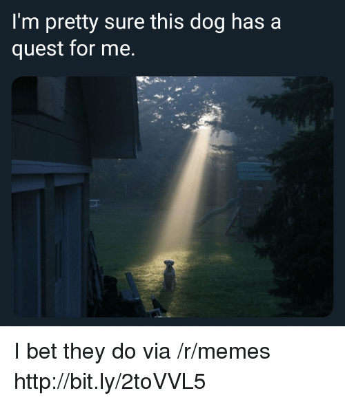I Bet, Memes, and Http: I'm pretty sure this dog has a  quest for me. I bet they do via /r/memes http://bit.ly/2toVVL5