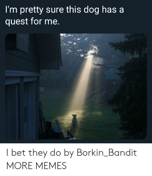Dank, I Bet, and Memes: I'm pretty sure this dog has a  quest for me. I bet they do by Borkin_Bandit MORE MEMES