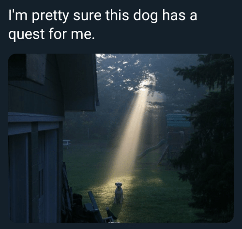 Dog Has: I'm pretty sure this dog has a  quest for me.