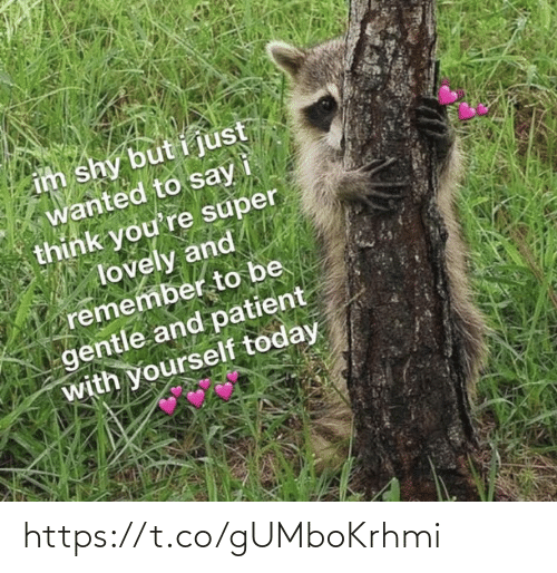 Memes, Patient, and Today: im shy but i just  wanted to say  think you're super  lovely and  remember to be  gentle and patient  with yourself today https://t.co/gUMboKrhmi