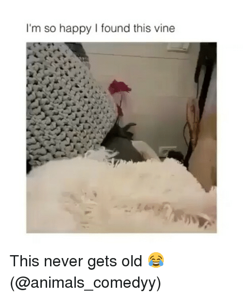 Animals, Funny, and Vine: I'm so happy I found this vine This never gets old 😂 (@animals_comedyy)