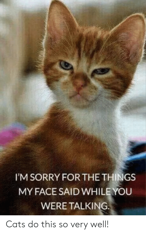 Cats, Memes, and Sorry: I'M SORRY FOR THE THINGS  MY FACE SAID WHILE YOU  WERE TALKING Cats do this so very well!