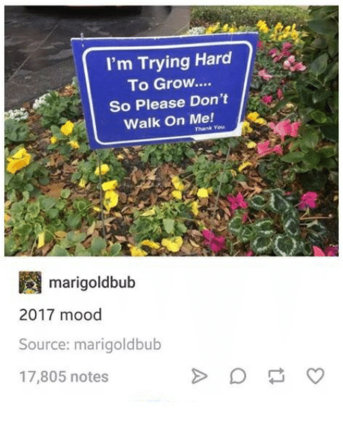 hardness: I'm Trying Hard  To Grow....  So Please Don't  Walk On Me!  Thank You  m arigoldbub  2017 mood  Source: marigoldbub  17,805 notes
