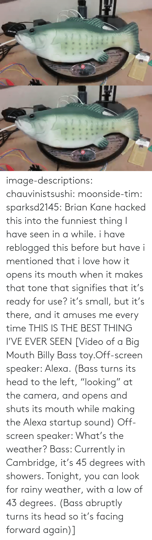 "there: image-descriptions:  chauvinistsushi:  moonside-tim:  sparksd2145:  Brian Kane hacked this into the funniest thing I have seen in a while.  i have reblogged this before but have i mentioned that i love how it opens its mouth when it makes that tone that signifies that it's ready for use? it's small, but it's there, and it amuses me every time  THIS IS THE BEST THING I'VE EVER SEEN  [Video of a Big Mouth Billy Bass toy.Off-screen speaker: Alexa. (Bass turns its head to the left, ""looking"" at the camera, and opens and shuts its mouth while making the Alexa startup sound)  Off-screen speaker: What's the weather? Bass: Currently in Cambridge, it's 45 degrees with showers. Tonight, you can look for rainy weather, with a low of 43 degrees. (Bass abruptly turns its head so it's facing forward again)]"