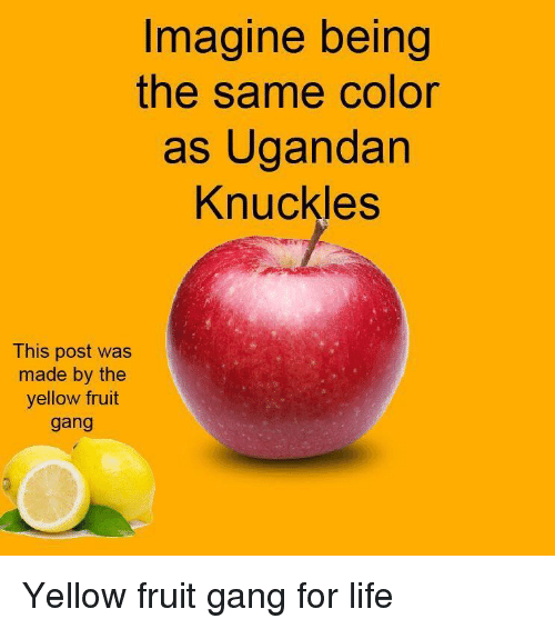 knuckles: Imagine being  the same color  as Ugandan  Knuckles  This post was  made by the  yellow fruit  gang Yellow fruit gang for life