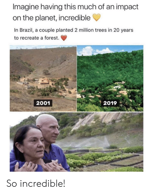 Recreate: Imagine having this much of an impact  on the planet, incredible  In Brazil, a couple planted 2 million trees in 20 years  to recreate a forest.  2019  2001 So incredible!