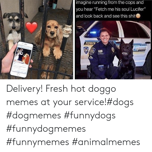 "Doggo Memes: imagine running from the cops and  you hear ""Fetch me his soul Lucifer""  and look back and see this shit  TOWN Delivery! Fresh hot doggo memes at your service!#dogs #dogmemes #funnydogs #funnydogmemes #funnymemes #animalmemes"