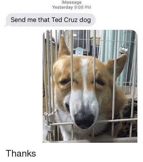 Ted Cruz: iMessage  Yesterday 9:08 PM  Send me that Ted Cruz dog Thanks