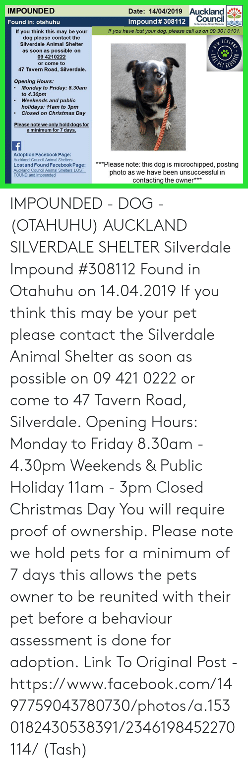 Christmas, Dogs, and Facebook: IMPOUNDED  Date: 14/04/2019 Auckland  Impound # 308112  Council  Found in: otahuhu  If you have lost your dog, please call us on 09 301 0101.  If you think this may be your  dog please contact the  Silverdale Animal Shelter  as soon as possible on  09 4210222  or come to  47 Tavern Road, Silverdale  Opening Hours:  Monday to Friday: 8.30am  to 4.30pm  Weekends and public  .  .  holidays: 11am to 3pm  Closed on Christmas Day  Please note we only hold dogs for  Adoption Facebook Page:  Auckland Council Animal Shelters  Lost and Found Facebook Page: lease note: this dog is microchipped, posting  Auckland Council Animal Shelters LOST  FOUND and Impounded  photo as we have been unsuccessful in  contacting the owner** IMPOUNDED - DOG - (OTAHUHU) AUCKLAND  SILVERDALE SHELTER  Silverdale Impound #308112 Found in Otahuhu on 14.04.2019  If you think this may be your pet please contact the Silverdale Animal Shelter as soon as possible on 09 421 0222 or come to 47 Tavern Road, Silverdale.  Opening Hours: Monday to Friday 8.30am - 4.30pm Weekends & Public Holiday 11am - 3pm Closed Christmas Day  You will require proof of ownership. Please note we hold pets for a minimum of 7 days this allows the pets owner to be reunited with their pet before a behaviour assessment is done for adoption.  Link To Original Post - https://www.facebook.com/1497759043780730/photos/a.1530182430538391/2346198452270114/  (Tash)