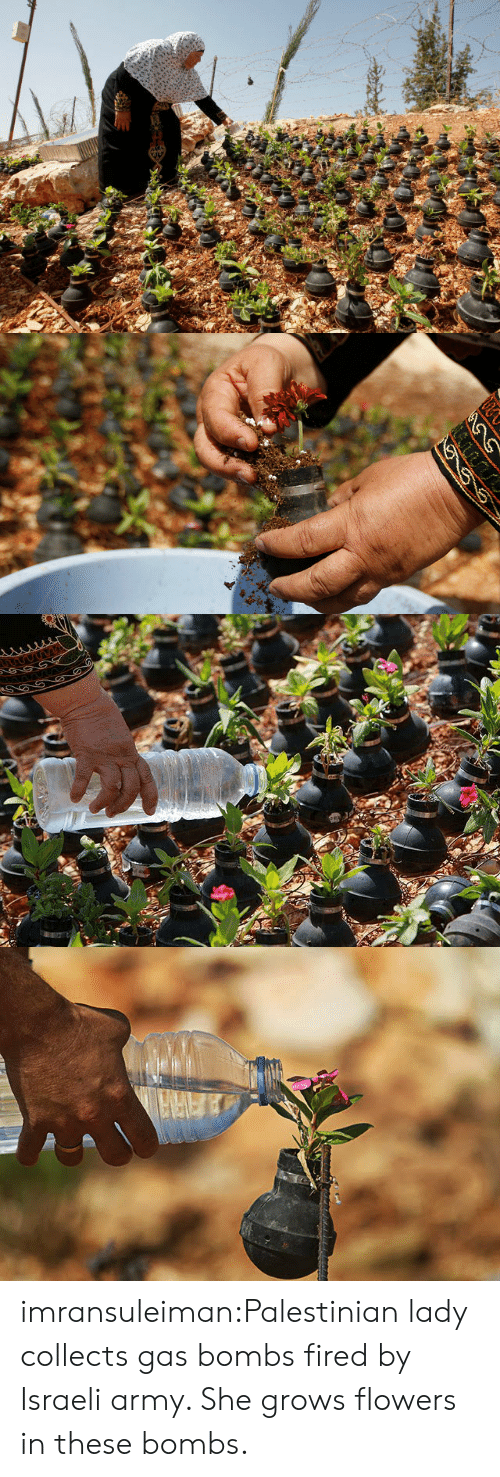 bombs: imransuleiman:Palestinian lady collects gas bombs fired by Israeli army. She grows flowers in these bombs.