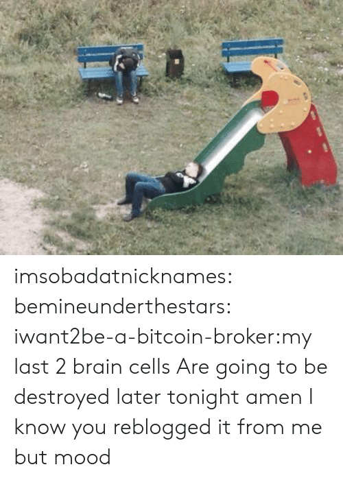 Mood, Tumblr, and Blog: imsobadatnicknames:  bemineunderthestars:  iwant2be-a-bitcoin-broker:my last 2 brain cells   Are going to be destroyed later tonight amen   I know you reblogged it from me but mood