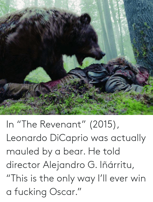 "Leonardo DiCaprio: In ""The Revenant"" (2015), Leonardo DiCaprio was actually mauled by a bear. He told director Alejandro G. Iñárritu, ""This is the only way I'll ever win a fucking Oscar."""