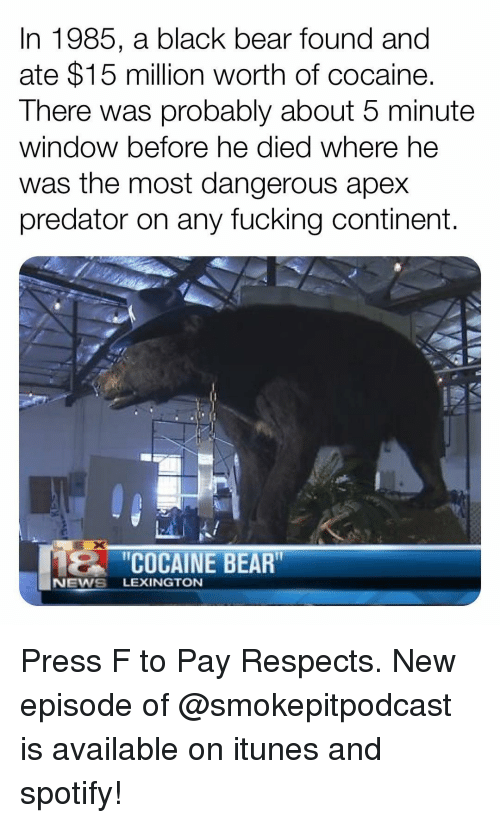 "Fucking, Memes, and News: In 1985, a black bear found and  ate $15 million worth of cocaine.  There was probably about 5 minute  window before he died where he  was the most dangerous apex  predator on any fucking continent.  2C  ""COCAINE BEAR  NEWS LEXINGTON Press F to Pay Respects. New episode of @smokepitpodcast is available on itunes and spotify!"