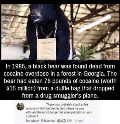Apex, Bear, and Black: In 1985, a black bear was found dead from  cocaine overdose in a forest in Georgia. The  bear had eaten 76 pounds of cocaine (worth  $15 million) from a duffle bag that dropped  from a drug smuggler's plane.  There was probably about a five  minute window before he died where he was  officially the most dangerous apex predator on any  continent  imi place Raspunde O 5 660 14 ore
