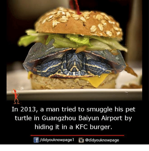 guangzhou: In 2013, a man tried to smuggle his pet  turtle in Guangzhou Baiyun Airport by  hiding it in a KFC burger.  /didyouknowpagel  @didyouknowpage