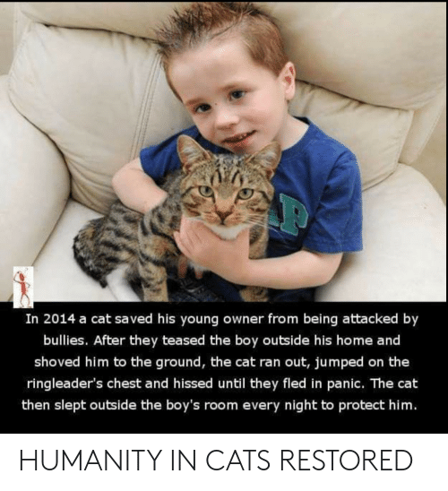 panic: In 2014 a cat saved his young owner from being attacked by  bullies. After they teased the boy outside his home and  shoved him to the ground, the cat ran out, jumped on the  ringleader's chest and hissed until they fled in panic. The cat  then slept outside the boy's room every night to protect him. HUMANITY IN CATS RESTORED