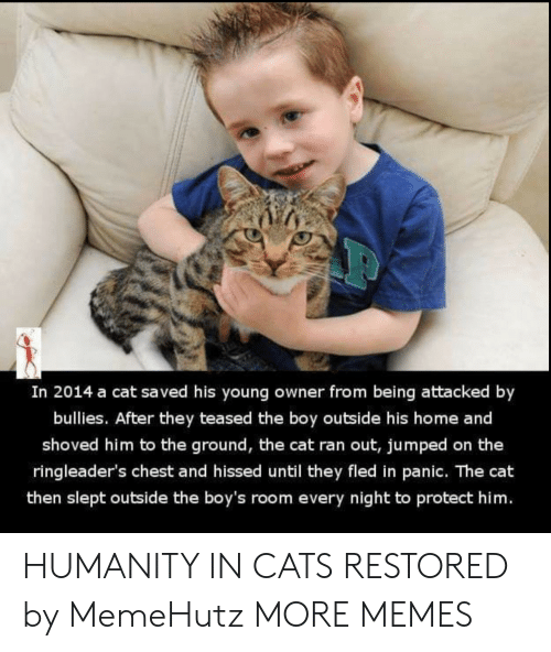 panic: In 2014 a cat saved his young owner from being attacked by  bullies. After they teased the boy outside his home and  shoved him to the ground, the cat ran out, jumped on the  ringleader's chest and hissed until they fled in panic. The cat  then slept outside the boy's room every night to protect him. HUMANITY IN CATS RESTORED by MemeHutz MORE MEMES