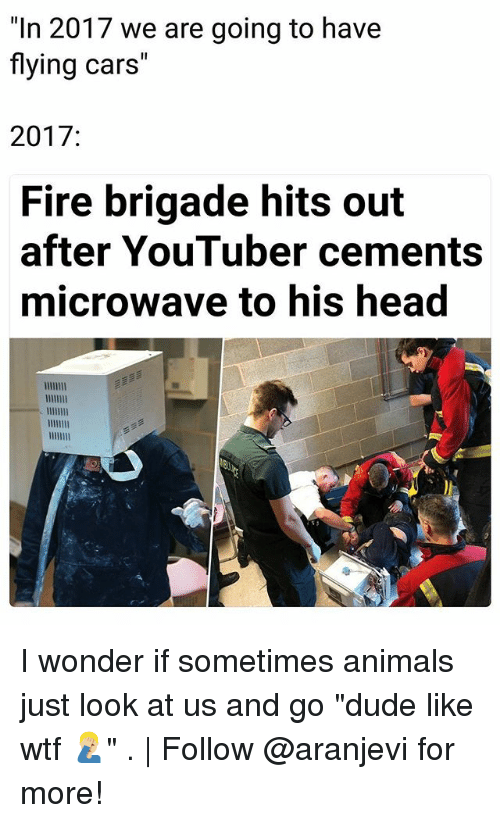 """Animals, Cars, and Dude: """"In 2017 we are going to have  flying cars""""  2017:  Fire brigade hits out  after YouTuber cements  microwave to his head I wonder if sometimes animals just look at us and go """"dude like wtf 🤦🏼♂️"""" .   Follow @aranjevi for more!"""