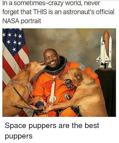 astronauts: In a sometimes-crazy world, never  forget that THIS is an astronaut's official  NASA portrait Space puppers are the best puppers