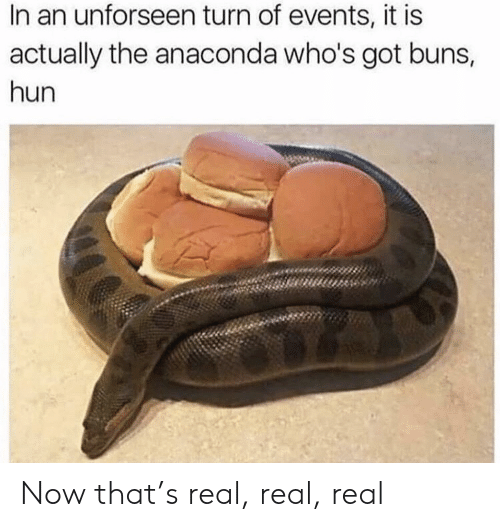 anaconda: In an unforseen turn of events, it is  actually the anaconda who's got buns,  hun Now that's real, real, real