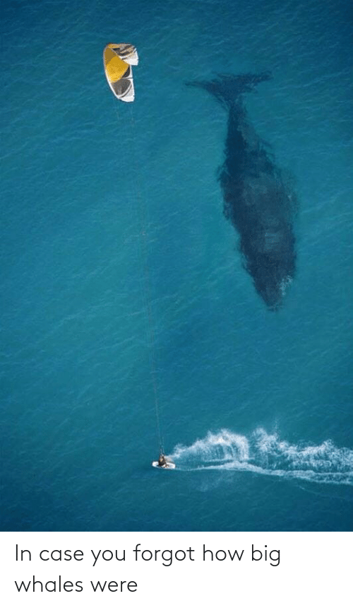 In Case: In case you forgot how big whales were