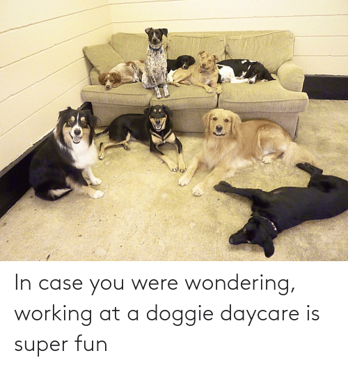 In Case: In case you were wondering, working at a doggie daycare is super fun