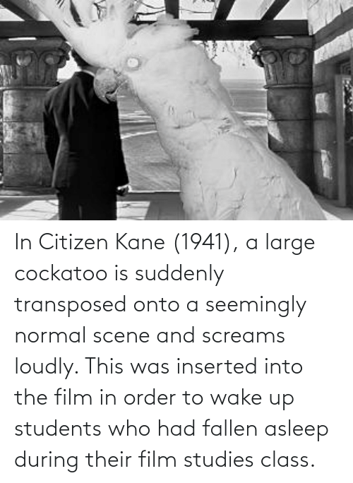 kane: In Citizen Kane (1941), a large cockatoo is suddenly transposed onto a seemingly normal scene and screams loudly. This was inserted into the film in order to wake up students who had fallen asleep during their film studies class.