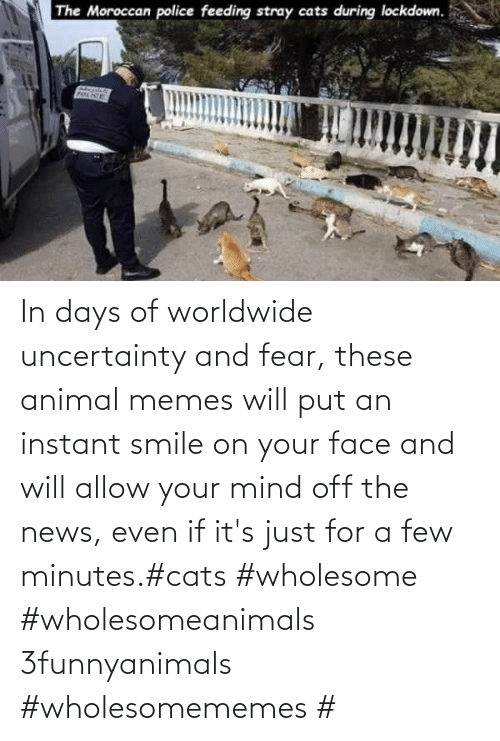 minutes: In days of worldwide uncertainty and fear, these animal memes will put an instant smile on your face and will allow your mind off the news, even if it's just for a few minutes.#cats #wholesome #wholesomeanimals 3funnyanimals #wholesomememes #