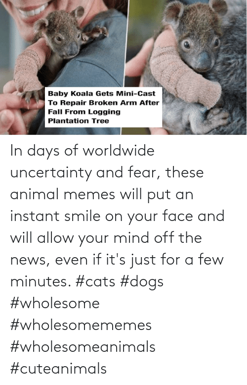 minutes: In days of worldwide uncertainty and fear, these animal memes will put an instant smile on your face and will allow your mind off the news, even if it's just for a few minutes. #cats #dogs #wholesome #wholesomememes #wholesomeanimals #cuteanimals