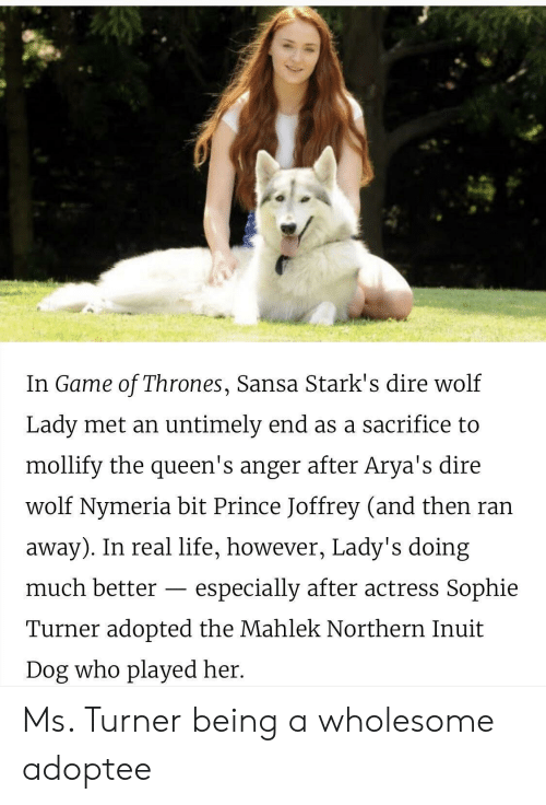 Turner: In Game of Thrones, Sansa Stark's dire wolf  Lady met an untimely end as a sacrifice to  mollify the queen's anger after Arya's dire  wolf Nymeria bit Prince Joffrey (and then ran  away). In real life, however, Lady's doing  much better - especially after actress Sophie  Turner adopted the Mahlek Northern Inuit  Dog who played her. Ms. Turner being a wholesome adoptee
