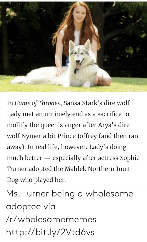 Turner: In Game of Thrones, Sansa Stark's dire wolf  Lady met an untimely end as a sacrifice to  mollify the queen's anger after Arya's dire  wolf Nymeria bit Prince Joffrey (and then ran  away). In real life, however, Lady's doing  much better  especially after actress Sophie  Turner adopted the Mahlek Northern Inuit  Dog who played her. Ms. Turner being a wholesome adoptee via /r/wholesomememes http://bit.ly/2Vtd6vs