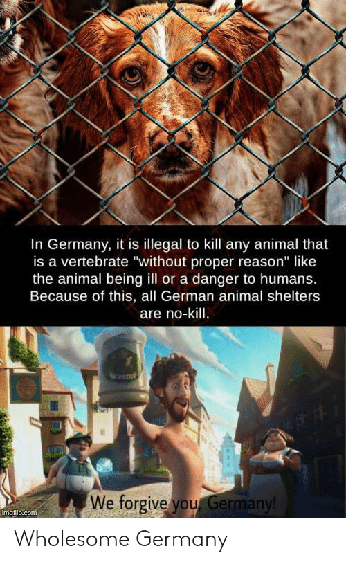 "Animal, Germany, and Wholesome: In Germany, it is illegal to kill any animal that  is a vertebrate ""without proper reason"" like  the animal being ill or a danger to humans.  Because of this, all German animal shelters  are no-kill.  We forgive you Germany!  imgflip.com Wholesome Germany"