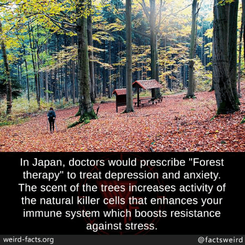 """Facts, Memes, and Weird: In Japan, doctors would prescribe """"Forest  therapy"""" to treat depression and anxiety  The scent of the trees increases activity of  the natural killer cells that enhances vour  immune system which boosts resistance  against stress  weird-facts.org  @factsweird"""