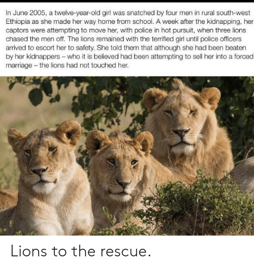 escort: In June 2005, a twelve-year-old girl was snatched by four men in rural south-west  Ethiopia as she made her way home from school. A week after the kidnapping, her  captors were attempting to move her, with police in hot pursuit, when three lions  chased the men off. The lions remained with the terrified girl until police officers  arrived to escort her to safety. She told them that although she had been beaten  by her kidnappers-who it is believed had been attempting to sell her into a forced  marriage -the lions had not touched her Lions to the rescue.