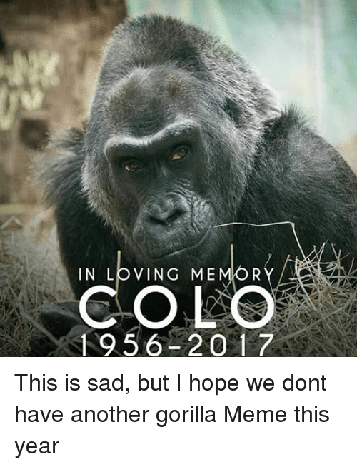 Gorilla Memes: IN LOVING ME  R  COLO  1956 2017 This is sad, but I hope we dont have another gorilla Meme this year