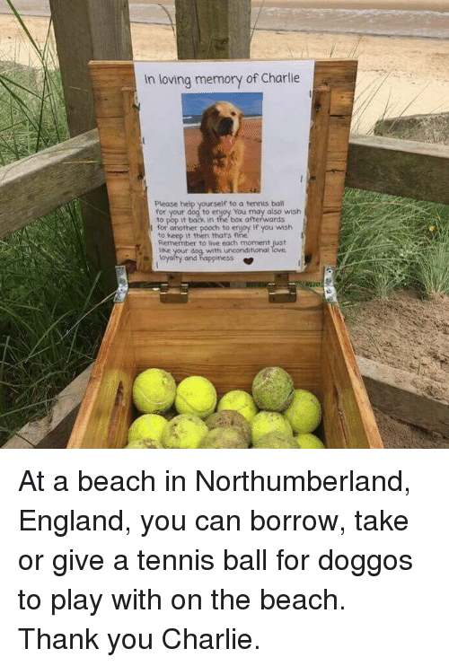 Charlie, England, and Memes: In loving memory of Charlie  Please help yourself to a tennis ball  for your dog to enjoy You may also wish  to pop it back in the box afterwards  for another pooch to enjoy. If you wish  to keep it then thats fine  Remember to live each moment just  tike  with unconditional  and  ness At a beach in Northumberland, England, you can borrow, take or give a tennis ball for doggos to play with on the beach. Thank you Charlie.