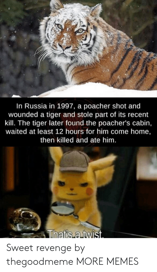 Dank, Memes, and Revenge: In Russia in 1997, a poacher shot and  wounded a tiger and stole part of its recent  kill. The tiger later found the poacher's cabin,  waited at least 12 hours for him come home,  then killed and ate him.  That's a twist. Sweet revenge by thegoodmeme MORE MEMES