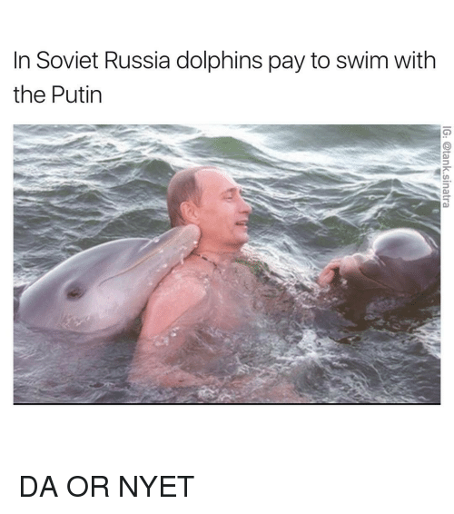 soviet russia: In Soviet Russia dolphins pay to swim with  the Putin DA OR NYET