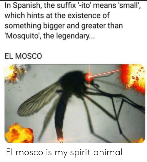 Spirit: In Spanish, the suffix -ito' means 'small',  which hints at the existence of  something bigger and greater than  Mosquito, the legendary...  EL MOSCO El mosco is my spirit animal