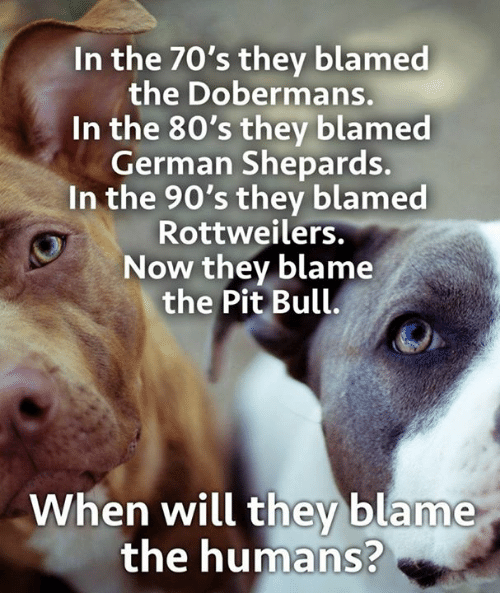 80s, Memes, and 90's: In the 70's they blamed  the Dobermans.  In the 80's they blamed  German Shepards.  In the 90's they blamed  Rottweilers.  Now they blame  the Pit Bull.  When will they blame  the humans?
